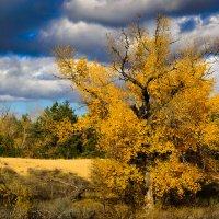 Осень :: snd63 Сергей