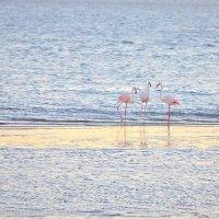 фламинго :: Евгений Мазурин