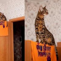 Жирафик комнатный :) :: Николай Ефимов