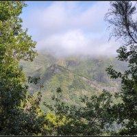 Madeira, Ribeiro  Frio-Portela. :: Jossif Braschinsky