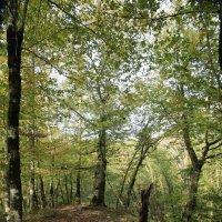 Осень в лесу :: valeriy khlopunov