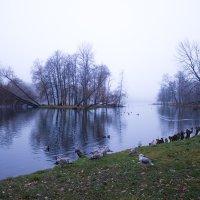 Октябрьский туман :: Алёнка Шапран