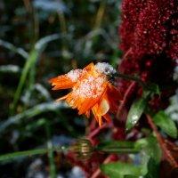 Первый снег... :: Вера (makivera)