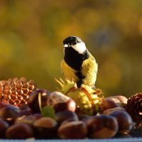 осень :: linnud