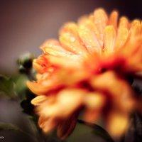 Исчезающая красота Осени... :: Дмитрий Скубаков