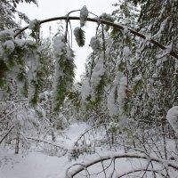 В зимнем лесу :: Леонид Чащин