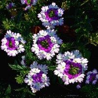 Цветочки :: Nina Yudicheva