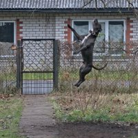 Прыжок :: Viktor Makarov