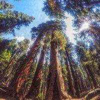 В лесу! :: Натали Пам