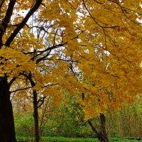 Золотая осень :: Виктор Стельник