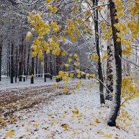 На берегу Волги, уже не осень, еще не зима :: Николай Белавин