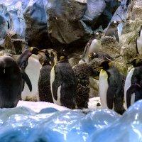 Пингвины 1 :: Андрей Бондаренко
