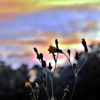 Под последними лучами заходящего солнца :: Николай Сапегин