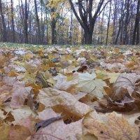 В осеннем лесу :: Елена Иванкина
