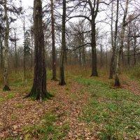 Мой парк в ноябре :: Андрей Лукьянов