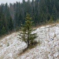 первый снег. :: petyxov петухов