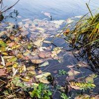 Осенняя река :: ирина лузгина