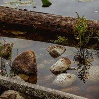 Карельские камни :: Ольга Нежикова