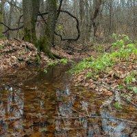 В осеннем лесу :: Роман В.