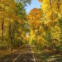 Осень :: ирина лузгина