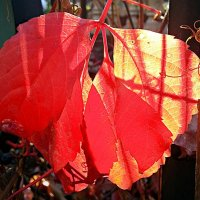Осенние листья :: Асылбек Айманов