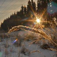 Рассвет  в лесу :: Aleksandr Ivanov67 Иванов
