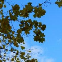 Природа рисует осень... :: Тамара (st.tamara)