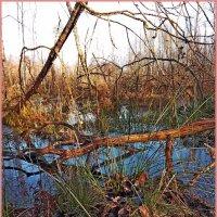 Осенние ручьи... :: Vladimir Semenchukov