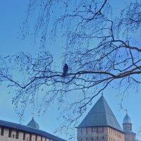 Птица присела на ветку... :: Татьяна