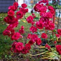 Цветы ноября.... :: Galina Dzubina