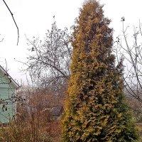 Зиму   ждала  и ждёт природа! :: Виталий Селиванов