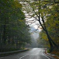 Дорога. Осень. Утро. :: ...Настя ...