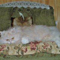 Любимая позиция на своем диванчике :: венера чуйкова