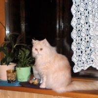 Персик на окне. :: венера чуйкова