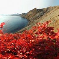 Алеют скумпии листы в закатном солнце Киммерии :: viton