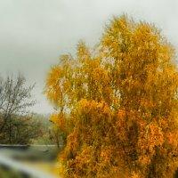Осень, осень. .... :: Юлия Закопайло