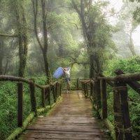 Волшебный лес :: Андрей Ковалев