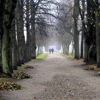 Старая липовая аллея парка :: Сергей