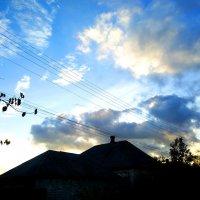 Поздняя осень тоже может быть красивой :: Наталья (ShadeNataly) Мельник