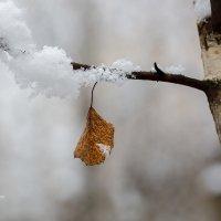 Одинокий лист :: Александр Синдерёв
