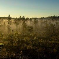 Туман, природа просыпается. :: Anna Klaos