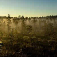 Туман, природа просыпается. :: Anna Leshtshenko
