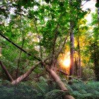 лес :: Артем Тимофеев