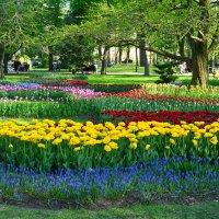 Весна в Гомельском парке :: Юлия Кузнецова