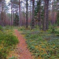 Прогулки в осеннем лесу.Ноябрь :: Павлова Татьяна Павлова