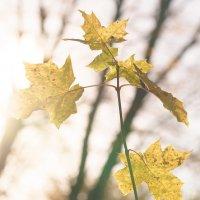 Осенние листья :: Анна Удалова
