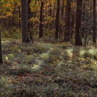 Солнечная полянка. :: александр мак mak