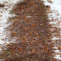 И тихо Осень уходила, след оставляя за собой :: Марина Щуцких