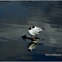 Чайки на дамбе :: Андрей
