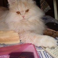 Кот и телефон. :: венера чуйкова
